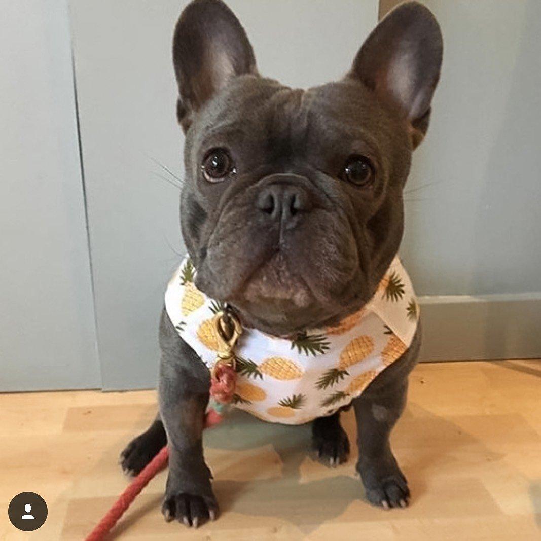 Jolie Dog accessories