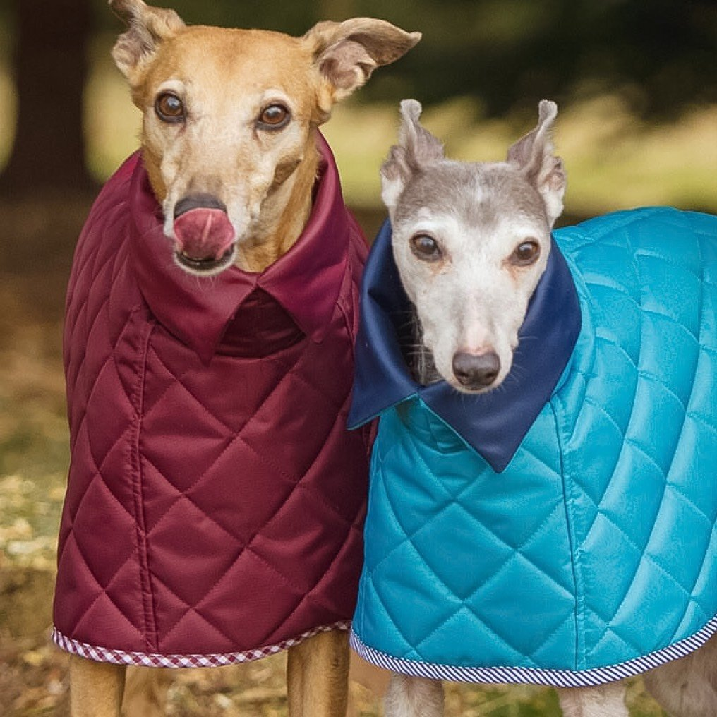 Redhound for Dogs accessories