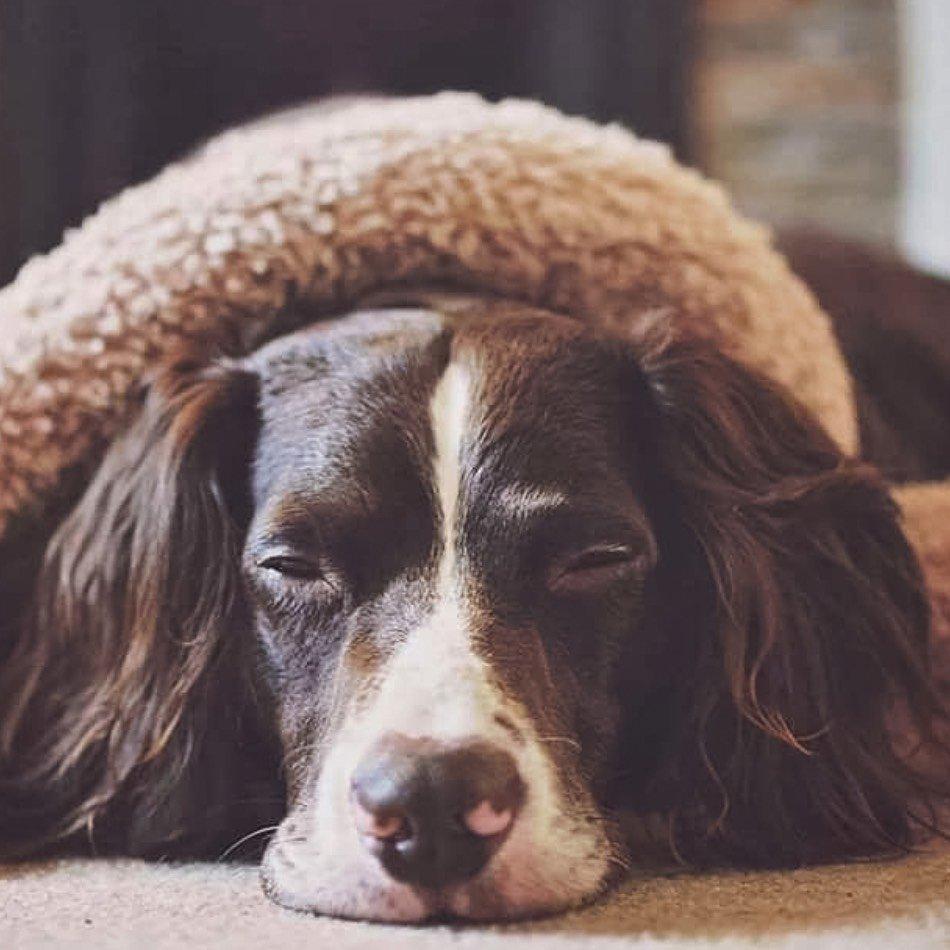 Slumbering Hound dog accessories