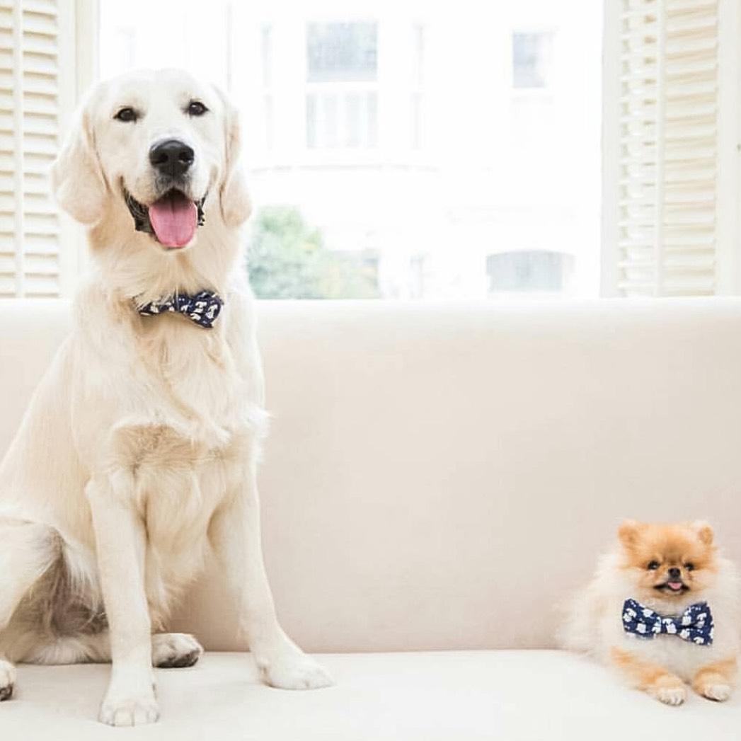Spoilt Little Puppy dog accessories