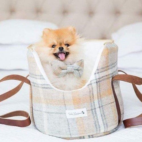 Teddy Maximus UK-made dog accessories