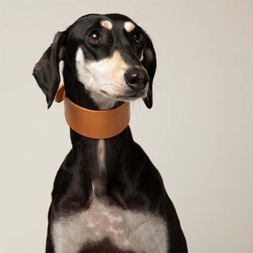 Seldom Found Briish-made dog collars and leads