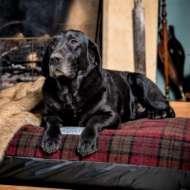 Berkeley Dog Beds Limited